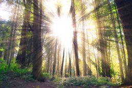 Lichtung Wald